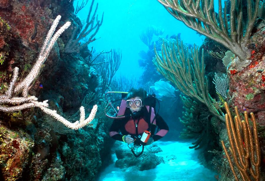 diving-roatan